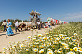 Blooming meadow in Spring, caravan of ox carts, Simpecado cart, El Rocio, pilgrimage, Pentecost festivity, Huelva province, Sevilla province, Andalucia, Spain, Europe