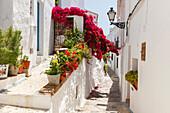 white alley with bougainvillea, Frigiliana, pueblo blanco, white village, Malaga province, Andalucia, Spain, Europe