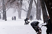 Walking under the trees during snow fall on a Sunday Afternoon, English Garden, Munich, Germany