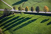Bäume und Schatten, Oberbayern, Deutschland