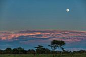 Serengeti Plains Under A Full Moon With Dramatic Sky, Tanzania