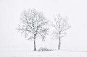 Turin province, Piedmont, Italy, Europe,  Abstract snow the Piedmont plain