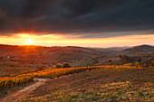 Tortona hills, Alessandria province, Piedmont, Italy, Europe