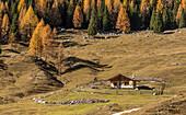 Cianpo de Crosc, Dolomiti d'Ampezzo Natural Park, Cortina d'Ampezzo, Belluno, Veneto, Italy, Autumn at Cianpo de Crosc
