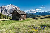 La Valle , Wengen, Alta Badia, Bolzano province, South Tyrol, Italy, In the pastures of Pra de Rit