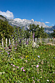 flower meadow in front of mountains, Theth, Albanian alps, Albania