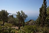 olive trees close to the coastline, Dhermi, Albanian Riviera, Albania