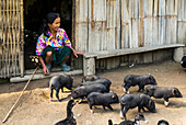 'A woman sits on the step of her house feeding a drove of piglets; Luang Prabang Province, Laos'