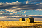 'Hay bales in a clear cut field highlighted by the sun with dramatic clouds and blue sky; Alberta, Canada'
