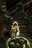 'Ein Affe isst eine Banane beim Sitzen auf einer Skulptur, Monkey Forest; Ubud, Bali Island, Indonesien'