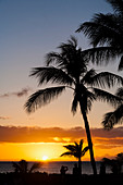 'Silhouetted palm trees and tourists along the coast looking at a golden sunset and tranquil ocean; Hawaii, United States of America'