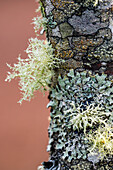'Lichens form patterns on the bark of a sapling; Astoria, Oregon, United States of America'