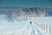 Schneebedeckte Strasse, Wintermorgen, Bäume, Münsing, Oberbayern, Bayern, Deutschland