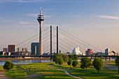 Sheep along the Rhine meadows, view over the Rhine river to Stadttor, television tower, Rheinknie bridge and Neuer Zollhof (Architect: F.O. Gehry), Duesseldorf, North Rhine-Westphalia, Germany
