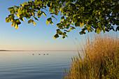 Morning mood at lake Mueritz, Mueritz-Elde-Wasserstrasse, Mecklenburgische Seenplatte, Mecklenburg-West Pomerania, Germany