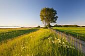 At Lieper Winkel, Usedom, Baltic Sea, Mecklenburg-West Pomerania, Germany