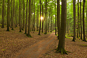 Beech wood above the chalk rocks, Jasmund National Park, Ruegen, Baltic Sea, Mecklenburg-West Pomerania, Germany