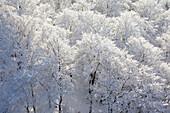 Blick vom Feldstein auf verschneite Bäume, Bruchhauser Steine, bei Olsberg, Rothaarsteig, Rothaargebirge, Sauerland, Nordrhein-Westfalen, Deutschland