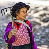 'A Thai woman carrying a rake; Tambon Pa Tueng, Chang Wat Chiang Rai, Thailand'