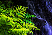 Plants grow beside a small stream at Silver Falls State Park, Silverton, Oregon, United States of America