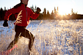Running across a field with snow and long grasses in winter, Homer, Alaska, United States of America