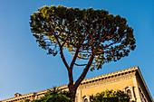 Eine Pinie vor einem alten Palast in der Abendsonne, Rom, Latium, Italien
