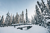 forest at Lake Louise, Bow Valley, Banff National Park, Alberta, Kanada, north america