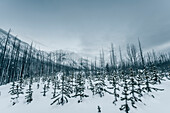 forest at Kootenay National park, Kootenay National Park, British Columbia, Kanada, north america