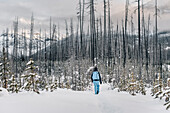 man hiking through the forest at Kootenay National park, Kootenay National Park, British Columbia, Kanada, north america