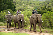 Elephant riding, Zuurberg, Garden Route, South Africa