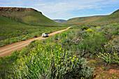 Springtime, West coast, South Africa