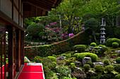 Rhododendron blüht im Zen-Garten, Sanzen-in-Tempel, Kyoto, Japan, Asien