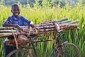 Ein Junge lächelt, als er sich eine Pause von einem Haufen Zuckerrohr auf seinem Fahrrad, Uganda, Afrika