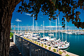 Alghero harbour, Sassari province, sardinia, italy, europe