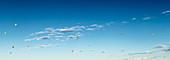 Hot-air balloons on Turkey sky, Goreme, Cappadocia, Turkey