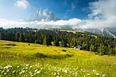 Blick auf das Würzjoch (Passo delle Erbe) mit Peitlerkofel im Hintergrund, Provinz Bozen, Südtirol, Trentino-Südtirol, Italien
