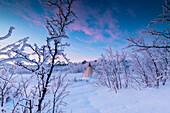 Isolierte Sami Zelt im Schnee, Abisko, Kiruna Gemeinde, Norrbotten County, Lappland, Schweden