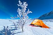 Isoliertes Zelt und gefrorener Baum in der Polarnacht, Abisko, Gemeinde Kiruna, Norrbottens län, Lappland, Schweden