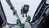 Dog sitting on snow and waiting for owner to get out car and go skiing, California, USA