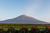 Landscape image of a vast tea field below the Kerinci Volcano in Sumatra, Indonesia.