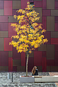 Woman sitting on tree in autumn colors in front of a residential building, Speicherstadt, Hamburg, Germany.