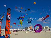 France, Northern France, Pas-de-Calais, Berck sur mer, kite festival