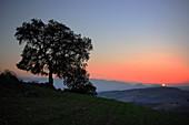 Spanien, Andalusien, Eiche bei Gegenlicht bei Sonnenuntergang