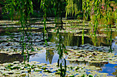France. Normandy. Eure. Giverny. Garden of Claude Monet's house. The pond in white water lilies
