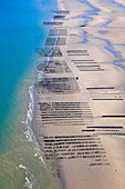 France, Northern France, Pas de Calais. Wissant Bay. Bouchot Mussels culture.
