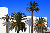 Spain, Andalusia, Tarifa, white wall and palm trees