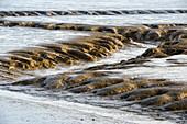 Tidal pool in Wattenmeer National Park, Jade Bay, German North Sea, Wilhelmshaven, Lower Saxony, Germany