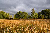 Marsh area under rain clouds in the evening light, Großefehn, Aurich, Ostfriesland, Lower Saxony, Germany