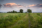 Dirt road in the evening light, Horsten, Friedeburg, Wittmund, Ostfriesland, Lower Saxony, Germany