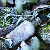 Frozen Bottle and Leaves on Ground